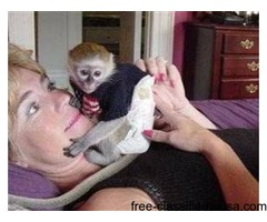 Adorable Capuchin and Marmoset Monkeys for Good Homes  call or text  (917) 737-5916