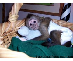 Adorable Capuchin and Marmoset Monkeys for Good Homes ..