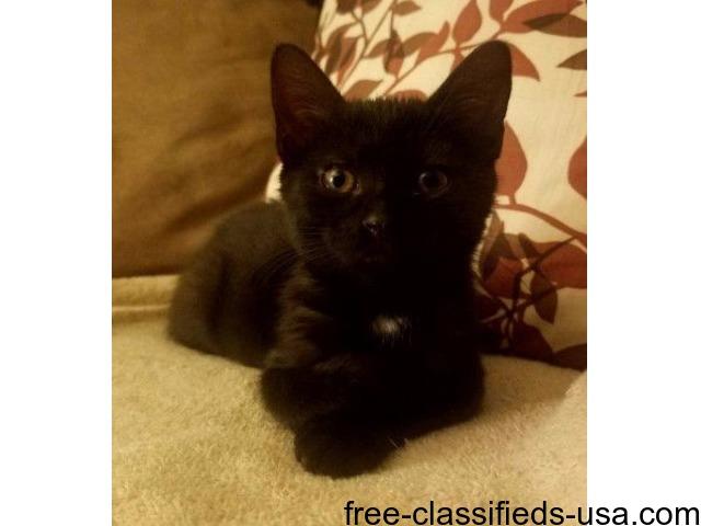 LOST BLACK KITTEN