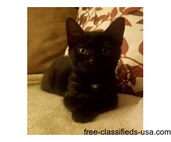 LOST BLACK KITTEN