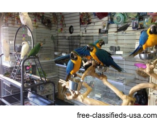 Birds For Sale >> Variety Of Parrots And Exotic Birds For Sale Animals