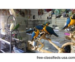 Variety of parrots and exotic birds for sale.
