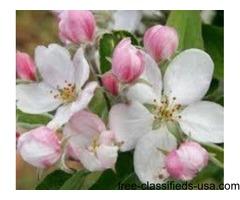 Apple Blossom Dentistry