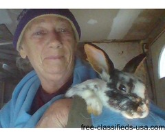 PHYLLIS EDWARDS BUNNYS FOR PETS ONLY