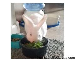 White male bunny