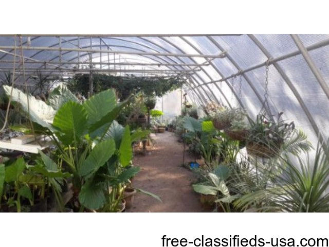 Houseplants | free-classifieds-usa.com