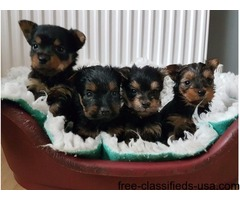 Boys & Girls healthy puppies