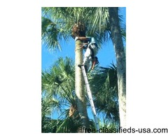 Salvare Tree Trimming and Landscaping Services, LLC