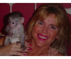 Marvelous Capuchin Monkeys