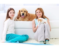 Best Thing To Clean Hardwood Floors   House cleaners  Westford Ma