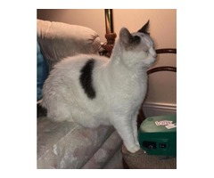 Adult female cat in need of a home