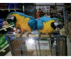 Get African Grey and Macaw