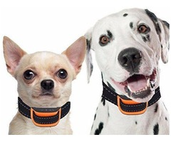 Purchase electric dog collars from electric-collars