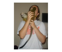 Two Squirrel Monkeys For  Rehoming