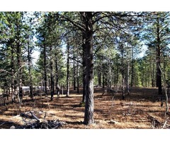 Beautiful & Affordable 89 acre lot