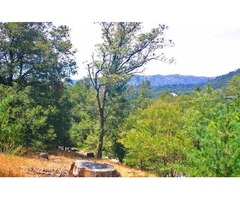 1/3 acre of forested land