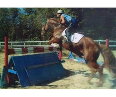Mobile Horse Trainer