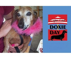 CAPE COD DOXIE DAY | free-classifieds-usa.com