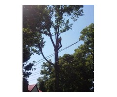 Jolley tree service