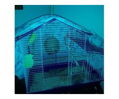 2 parakeets with bird cage