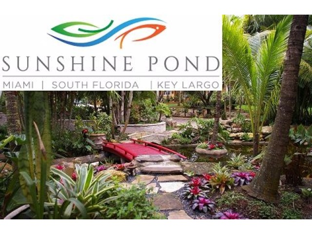 Koi Pond Waterfall Design   free-classifieds-usa.com