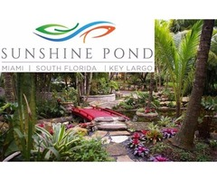 Koi Pond Waterfall Design