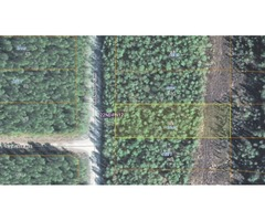Great lot for your cabin or home in Willow