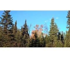 1 Acre of Beautiful Alaska Property Near Fishing