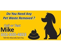 I can clean up your dogs waste + So Much More