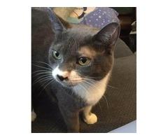 Missing cat 8/25/17