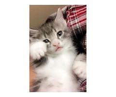 4 lovable kittens for sale