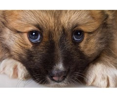 Affordable Pet Waste Removal Service