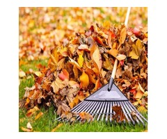 Fall clean ups and organic fertilizing