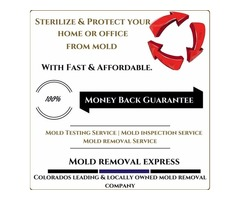 Protect your home from mold infections