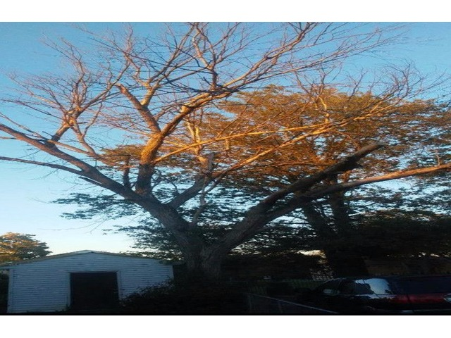 Remove tree for fire wood | free-classifieds-usa.com