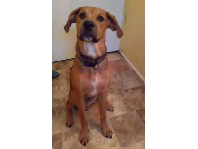 Lost dog!   free-classifieds-usa.com
