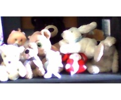 shelf of stuff animals