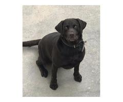 $35.00 / Night Dog Boarding - Friday to Monday - Dog LOVER