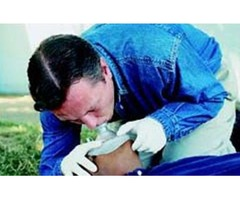 CPR Classes & First Aid Certification in San Jose by Adams Safety