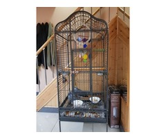 adorable Congo grey parrot for sale | free-classifieds-usa.com