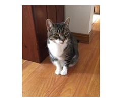 Free Senior Female Cat-Need to Rehome ASAP