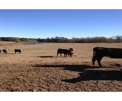 347 acres for sale