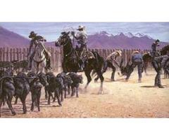 Montana Black Gold Larry Zabel