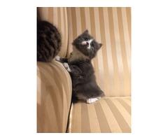 Stunning Kitten Share