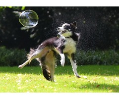 Perfect training place for your Collies