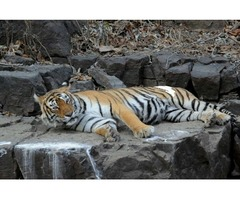 India's most renowned Tiger Trail Tour to India