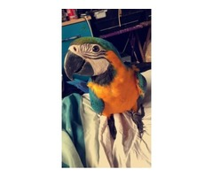 Luxury Bird Rehoming