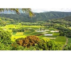 Financial Advisor in Hawaii