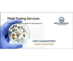 Mold Testing Denver | Toxic Black Mold & Asbestos Remediation!