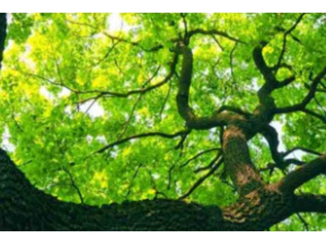Serenity Tree Care | free-classifieds-usa.com